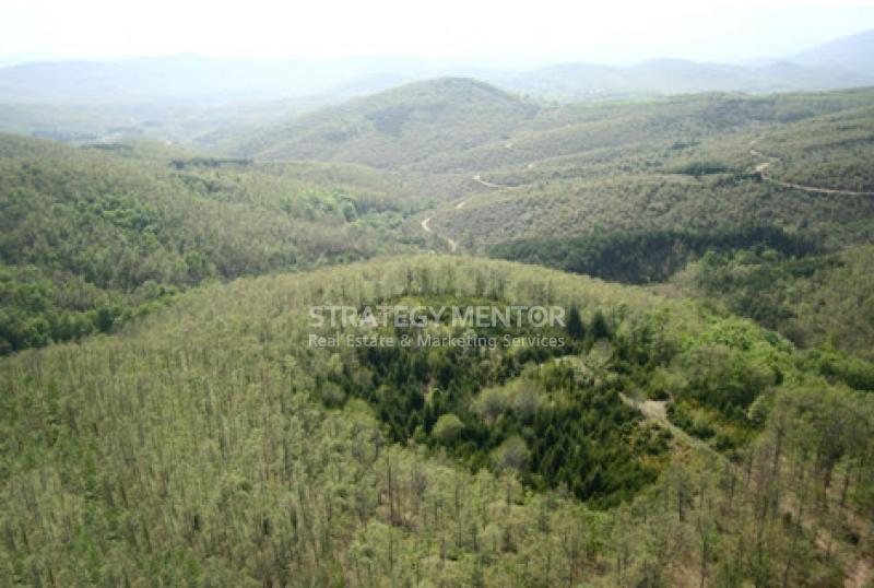 Αγροτεμάχιο 14000 τ.μ. προς Πώληση: Ταξιάρχης, Πολύγυρος, Χαλκιδική